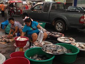 Selling fish in Khon Kaen market