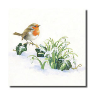 AMMF Christmas card: Robin and Snowdrops
